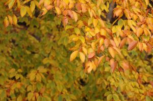 leaves-vermont_0259