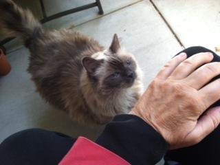 cat-hand